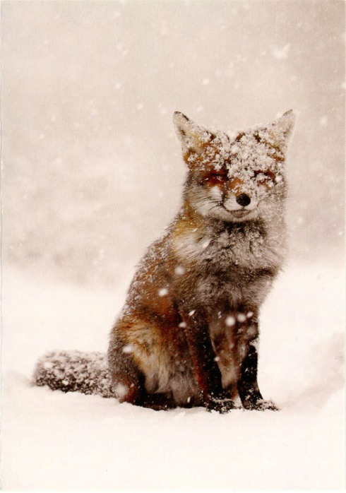 fox_in_the_snow001
